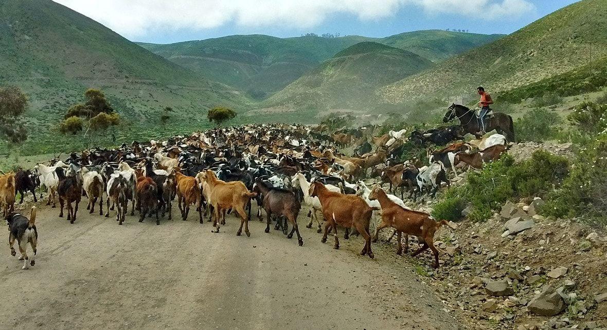 Animales Tour Desierto Florido Costero