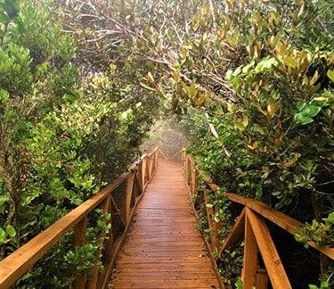 Tour Parque Fray Jorge