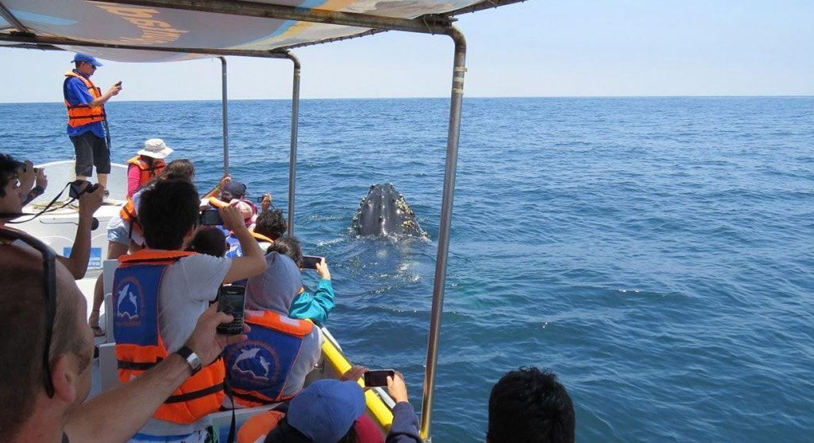 Tour Isla Damas: Turistas y Ballenas