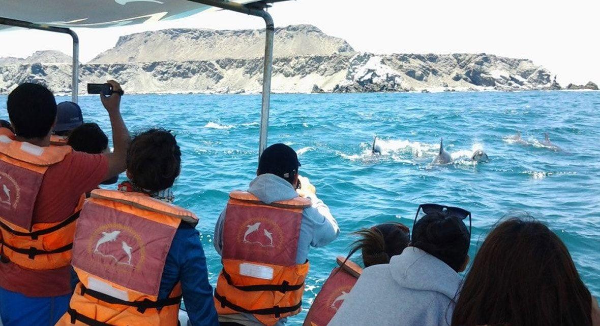 Tour Isla Damas: Delfines