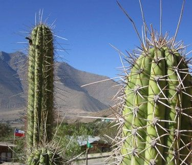 Tour Valle del Elqui